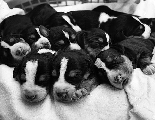 Metric Pups