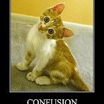 confusedkitty