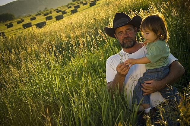 Summer Farm