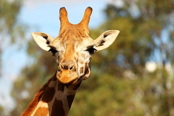 Behind The Scenes At Taronga Western Plains Zoo