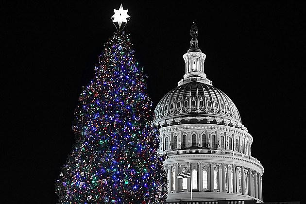 Montana Will Provide This Year's U.S. Capitol Christmas Tree